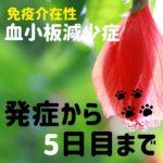 血小板減少症を発症した犬の話2