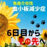 血小板減少症を発症した犬の話3